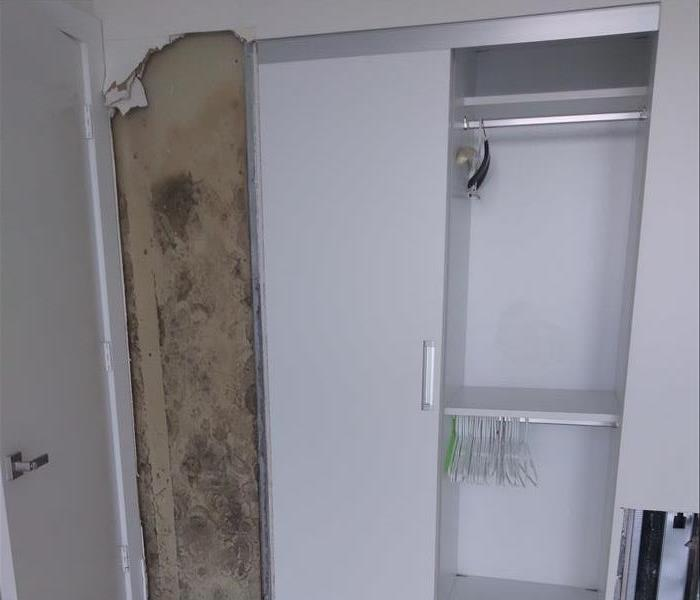 Mold in a House After
