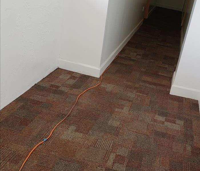Carpet Cleaning Apartment Before
